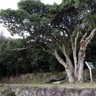 Tombe n.1 d'Oka-no-Tani: la tombe se situe de façon discrète en haut d'une petite colline