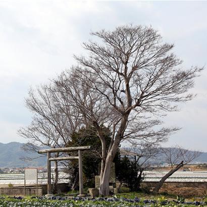 Site légendaire du mythe de la création du Japon : Ashihara-koku